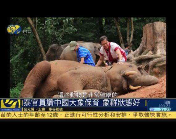 泰國官員讚中國大象保育 象群狀態好-鳳凰秀สัมภาษณ์พิเศษ วีระศักดิ์ โควสุรัตน์ รองปธ.กมธ.การทรัพยากรธรรมชาติฯ วุฒิสภา อดีตรมว.การท่องเที่ยวและกีฬา บนเส้นทางอนุรักษ์ช้างไทยสู่การอนุรักษ์ช้างจีน